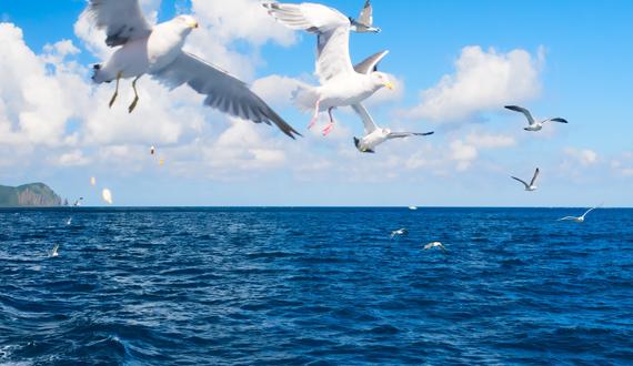 【株式会社海族】海とともに生きるということ