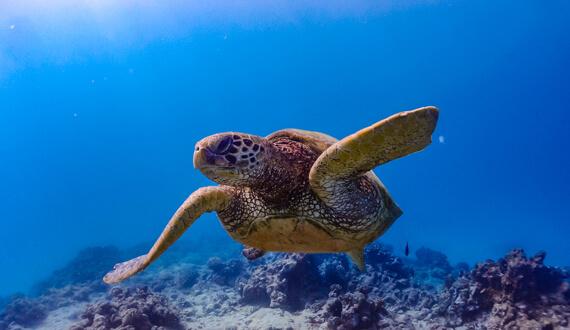 海洋汚染の実態調査と研究|事業内容|株式会社海族DMC